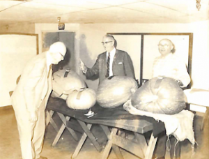 Pumpkin Contest 3